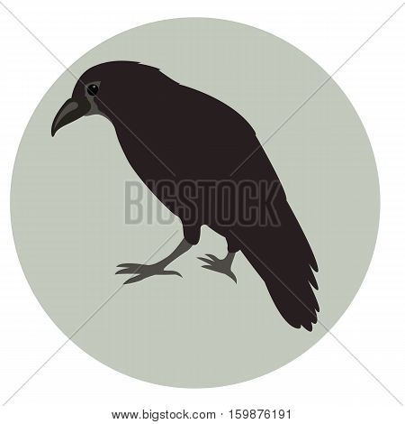 Crow vector illustration style Flat side profile