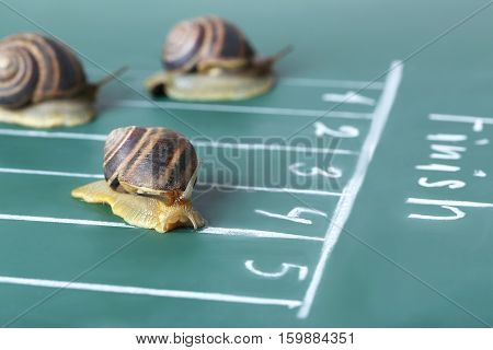 Brown Snails Run To The Finish Line