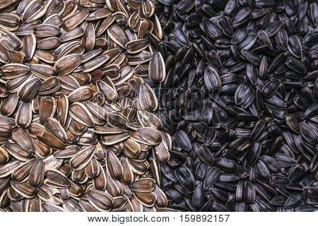 two kinds sunflower seeds background or texture