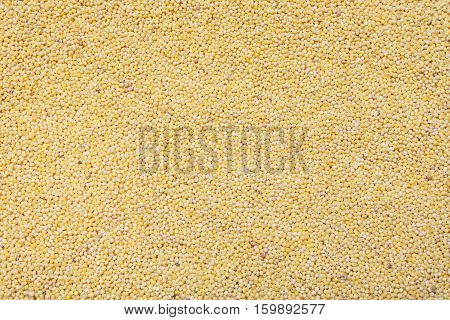 yellow millet cereal backdrop background or texture