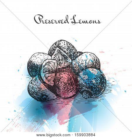 Preserved Lemons watercolor effect illustration. Vector illustration of Israeli cuisine.
