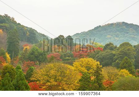 Color of Japanese's autumn forest in dusky day. Colorful of autumn season in cloudy morning.  Autumn in Kyoto, Japan
