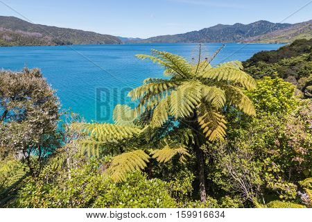 Queen Charlotte Sound in Marlborough Sound, South Island, New Zealand