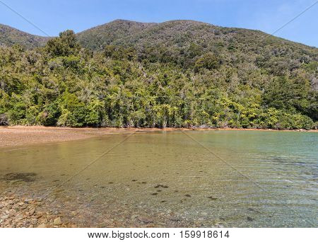 tropical rainforest growing in Endeavour Inlet in Marlborough Sounds, South Island, New Zealand