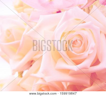 Beautiful bunch of white and purple rose flowers background