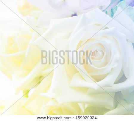 Beautiful bunch of white rose flowers background with color filters