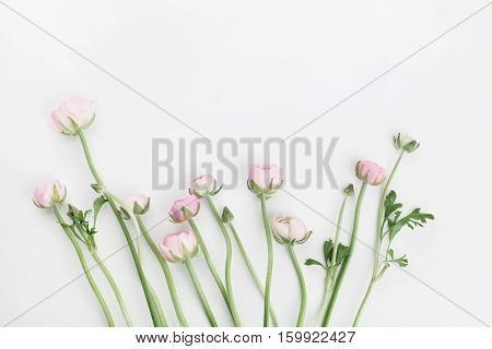 Beautiful spring Ranunculus flowers on white table from above. Floral border. Wedding mockup. Pastel color. Clean space for text. Flat lay style.