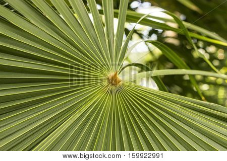 A fanned out palm leaf in an indoor garden.