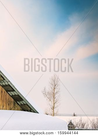 Snow-covered roof of the shed and poplar on the background of blue sky with pink clouds on a winter day at sunset close-up