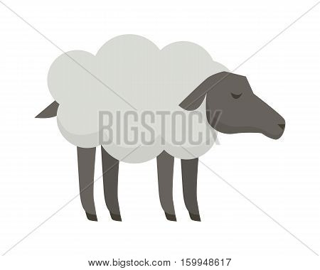 Sheep illustration. Vector in flat style design. Domestic animal. Country inhabitants concept. Picture for farming, animal husbandry, wool and meat production  companies. Isolated on white background.