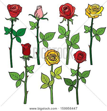 Roses with flower buds isolated on white. cartoon vector illustration. Colored flowers rose yellow and red, floral cartoon plant, blossom roses illustration