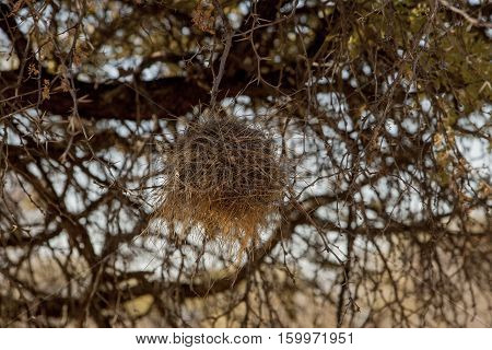 Bird nest on a tree with a plurality of branches
