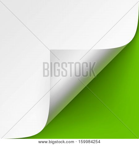 Vector Curled corner of White paper with shadow Mock up Close up Isolated on Bright Green Background