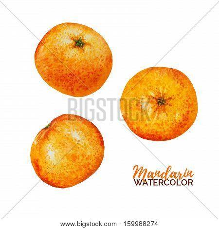 Watercolor mandarine orange fruit set isolated on white background, watercolour orange citrus, hand drawn tangerine