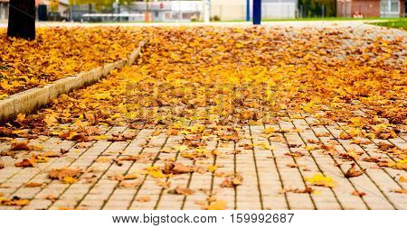 Maple leaves on the concrete slab tiles paved floor. The fallen leaves in the autumn are lying on the floor on square concrete paving slabs outside. Background image.