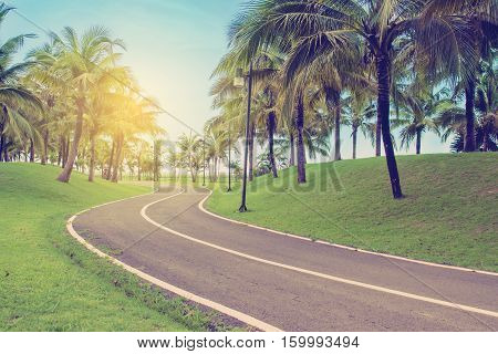 Walkway With Coconut Palm Trees.