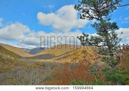 A landscape in autumn taiga with cedar pine on foreground.