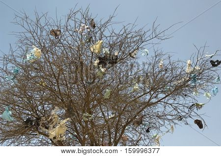 Plastic Bags in Bare Tree