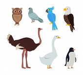 Set of birds isolated. Owl dove blue parrot eagle ostrich goose penguin. Collection of aves. Group of toothless beaked jaws birds, laying of hard-shelled eggs. Stickers for children. Vector poster