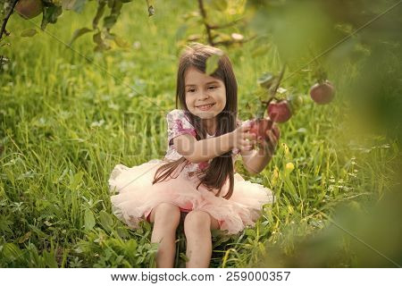 Freshness, Fresh Fruit, Food Freshness Youth Growth Nutrition