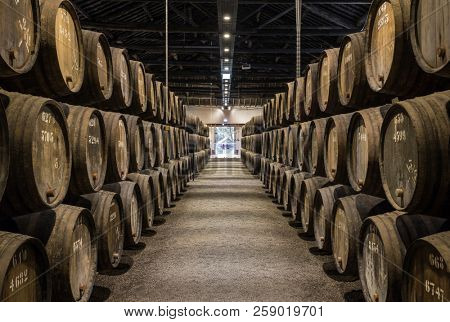 Rows of wooden porto wine barrels in wine cellar Porto, Portugal.