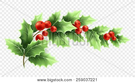Christmas Holly Branch Realistic Illustration. Crescent Twig With Green Leaves And Red Berries On Tr