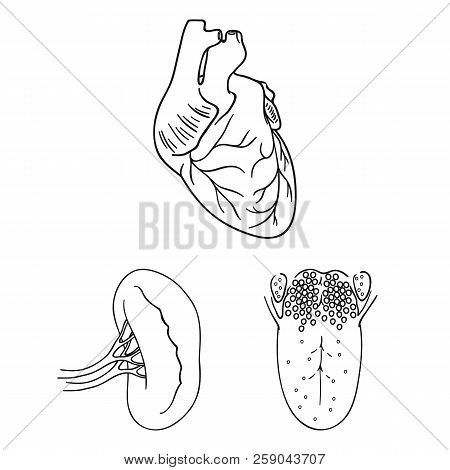 Human Organs Outline Icons In Set Collection For Design. Anatomy And Internal Organs Vector Symbol S