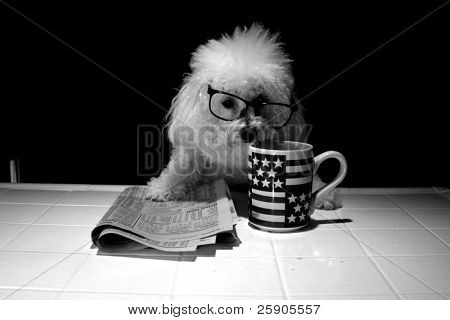 poster of Fifi our Bichon Frise is shaken up at the news she reads about her stock