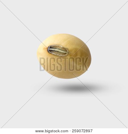 Soybean On Gray Background And Clipping Path