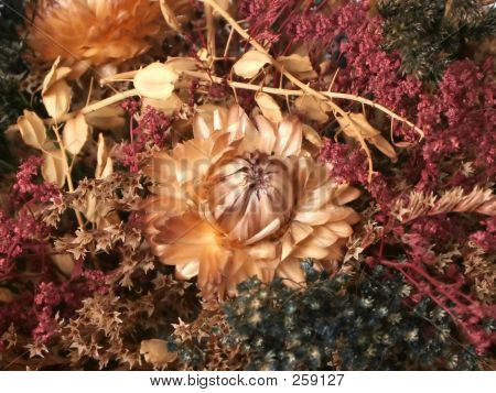 Dried Fall Flowers Close Up 2 F
