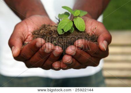 una planta verde segura en la palma de una mano de personas, representa conceptos amable tierra