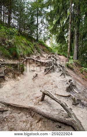 Forest Near Ruin Of The Valdstejn Gothic Castle
