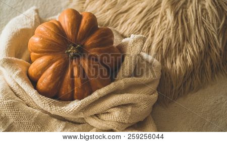 Big Orange Pumpkin On Warm Sweater. Pumpkin In The Soft Pullover. Thanksgiving Background - Orange P