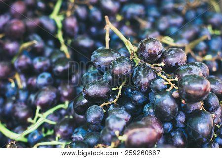 Grape Background. Dark Grape. Blue Grape. Wine Grape.