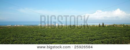 a beautiful view from the island of Maui Hawaii, showing its diversity of nature, lush tropical green foliage, and beautiful sky. A true Paradise on earth