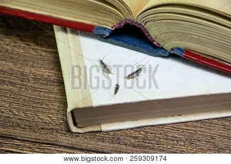 Insect Feeding On Paper - Silverfish. Pest Books And Newspapers. Silverfish Of Several Pieces Near T