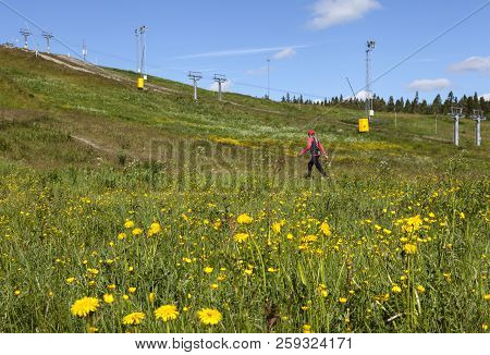 Umea, Sweden On June 21. View Of A Flowerful Downhill Slope On June 21, 2018 In Umea, Sweden. Uniden