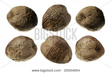 Six coconuts collection isolated on white