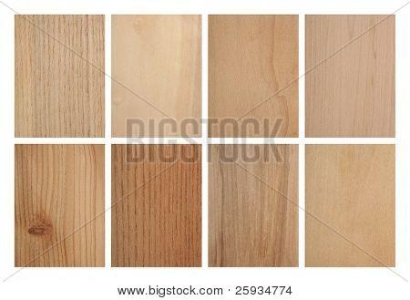 Set of eight wood textures: ash tree, aspen, cypresses, hazel, larch tree, phellodendron, rowan tree and linden