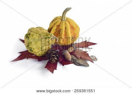 Decorative Colorful Mini Pumpkins