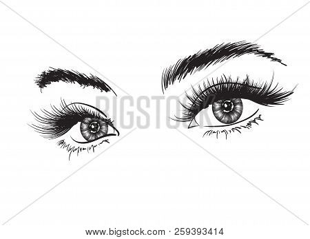 Hand-drawn Woman's Luxurious Eye With Perfectly Shaped Eyebrows And Full Lashes. Idea For Business V