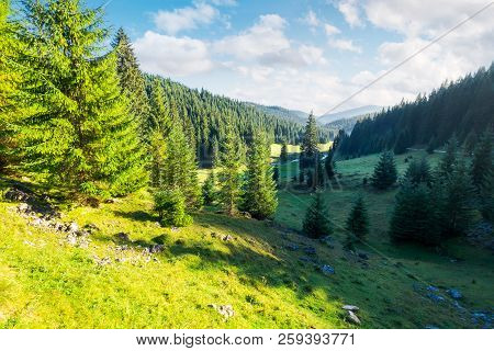 Lovely Valley With Spruce Forest. Wonderful Landscape Of Apuseni Mountains In Autumn. Beautiful Clou