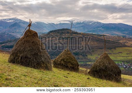 Haystacks On The Hill. Gloomy Late Autumn Landscape With Overcast Sky. Snow On Tops Of Distant Mount