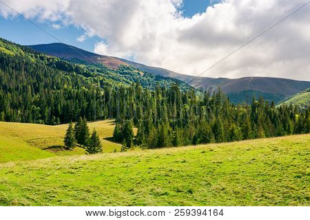 Wonderful Valley With Spruce Forest. Beautiful Landscape In Mountains. Sunny And Warm September Weat