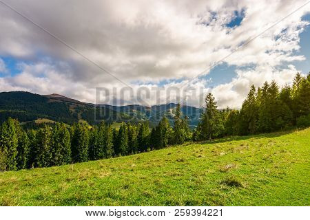 Beautiful Carpathian Landscape In Early Autumn. Spruce Forest On A Grassy Hill. Top Of The Distant M