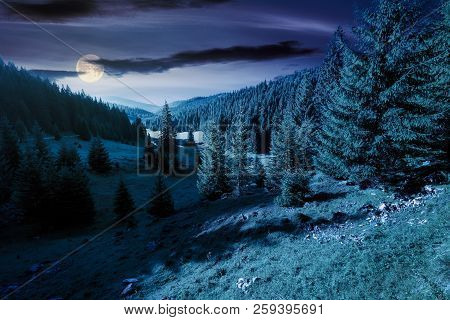 Lovely Valley With Spruce Forest At Night In Full Moon Light. Wonderful Landscape Of Apuseni Mountai