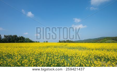 Landscape With Big Rapeseed Field And Blue Sky