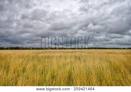 Big Brown Meadow With Dramatic Sky In Autumn