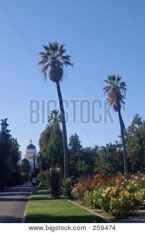 California Capitol Building And Palm Trees