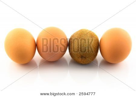 Kiwi, Pretending To Be An Egg